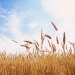 Египет отказался от торговой войны с экспортерами зерна