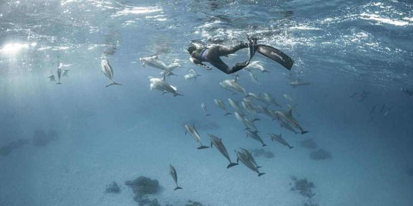 dolph01