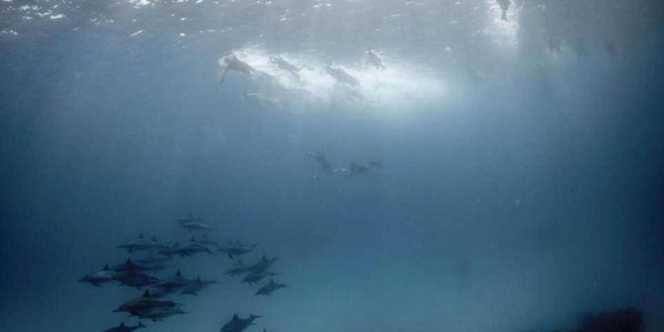 dolph02