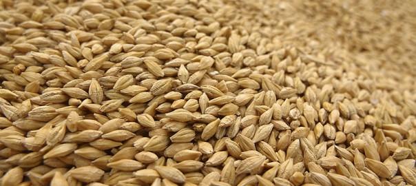 В Новосибирской области задумались о создании регионального оператора по перевозке зерна
