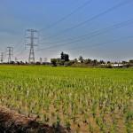 Министерство окружающей среды разведет тучи итальянскими машинами