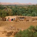 Организация лагерей и выезды на сафари запрещены в Бахарии