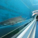 В Хургаде создадут искусственные подводные руины и музей