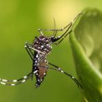 Клиникам Хургады запретили проводить анализы пациентов с признаками лихорадки Денге